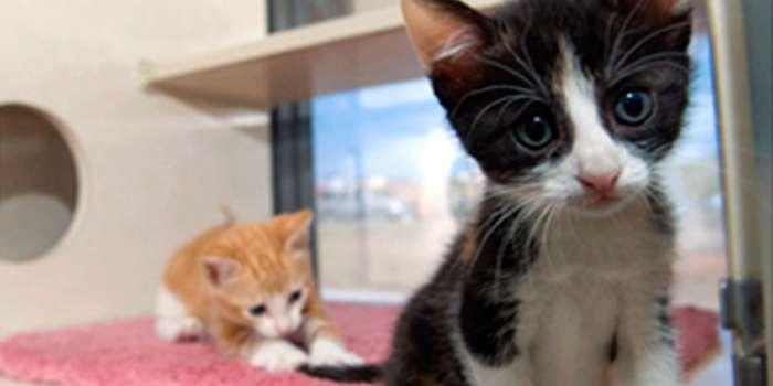 Remedios naturales para la gastroenteritis en gatos