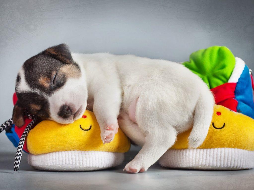 Síntomas de la dermatitis atópica canina