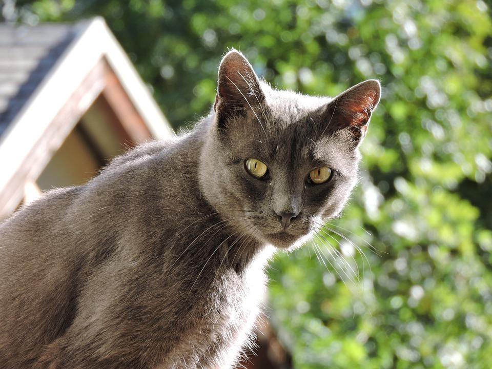 Síntomas de la hipotermia en gatos