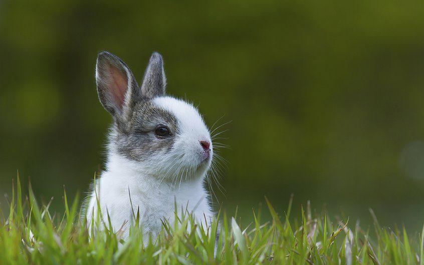 Síntomas de la sarna en conejos