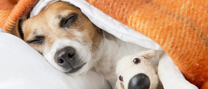 Síntomas de leishmaniasis en perros