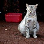 Síntomas de una gata embarazada