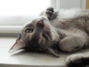 Si tienes una gata en celo