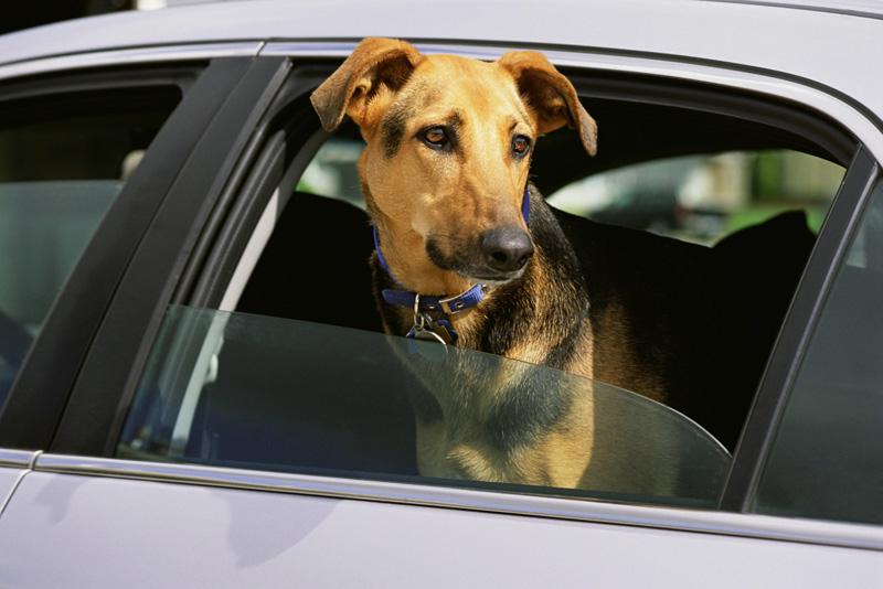 Sigue estos consejos para viajar con perro de forma segura
