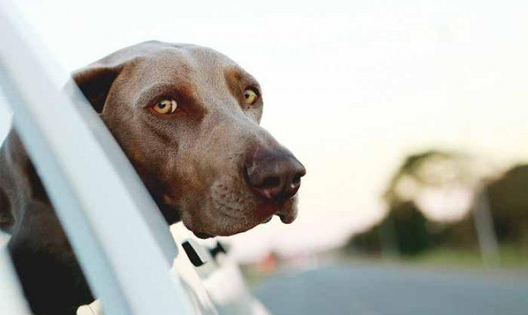 Te contamos cómo enseñar a un perro a rastrear