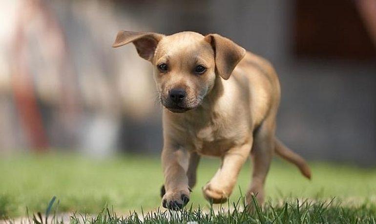Te hablamos de los síntomas de leishmaniasis canina