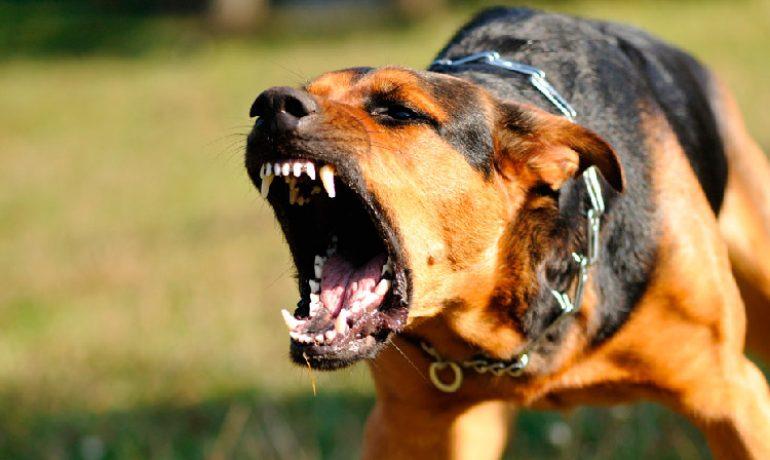 Todo sobre la agresividad canina