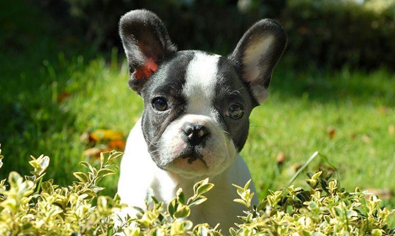 Todo sobre la anemia canina
