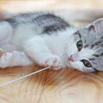 Todo sobre la fiebre en gatos