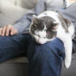 Todo sobre la insuficiencia renal en gatos