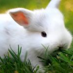Todo sobre la sarna en conejos