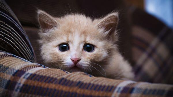 Tranquilizantes naturales para gatos contra el estrés