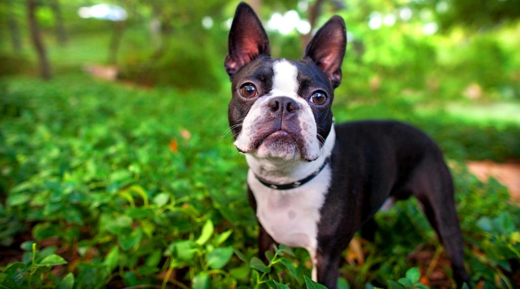 Tratamiento de la anemia en perros