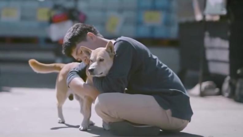 Tratamiento de la ceguera en perros