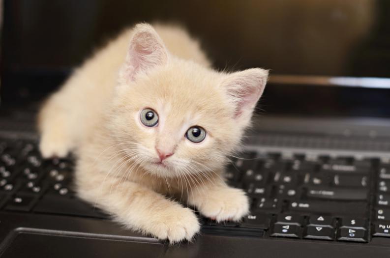 Tratamiento de la gastroenteritis en gatos