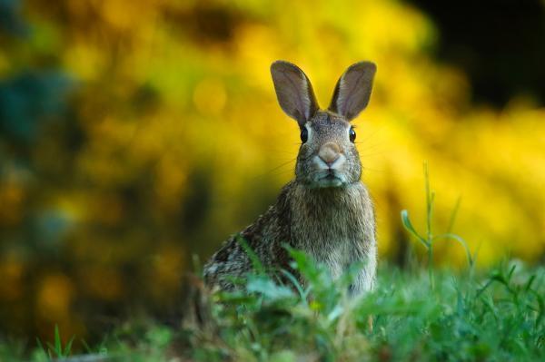 Tratamiento de la sarna en conejos