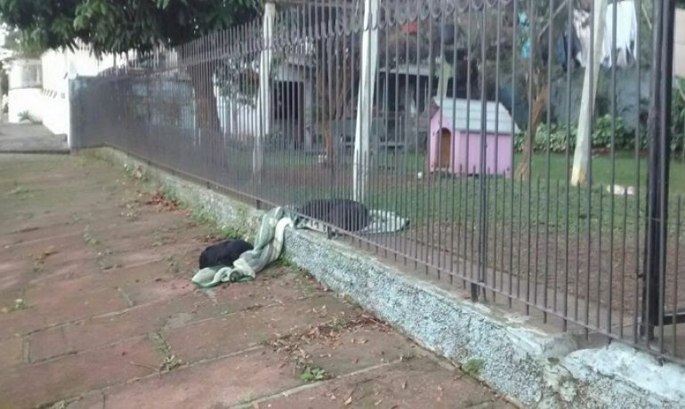 Un cachorro arrastra una manta fuera de su casa para compartirla con un perro callejero