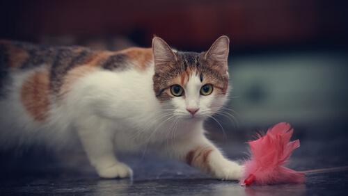 Vitaminas específicas para gatos