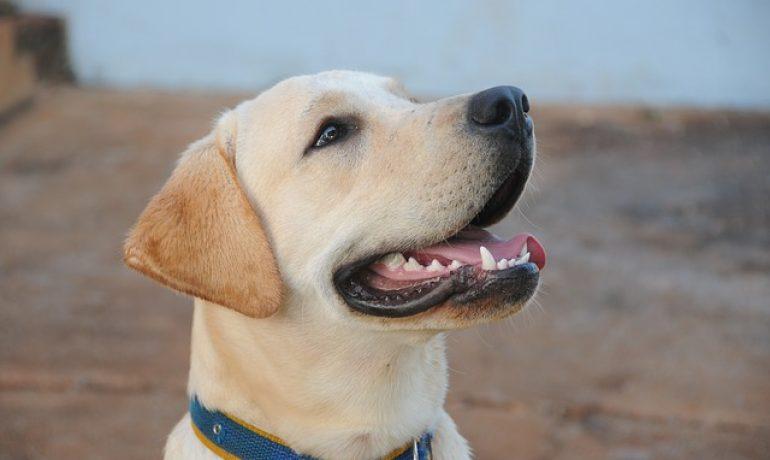 Todo sobre la halitosis en los perros