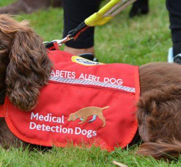 mascotas que detectan enfermedades