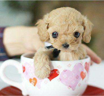 perro taza de té