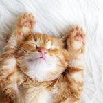 Gastroenteritis en gatos