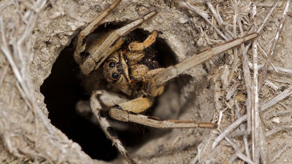12 Curiosidades sobre las arañas que seguro que no sabes