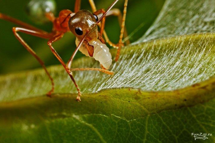 10 Curiosidades sobre las hormigas que seguro que no sabes