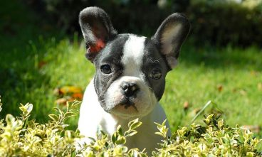 10 Trucos para mejorar la vida de tu perro