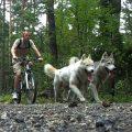 5 Planes dog-friendly para disfrutar del verano con tu perro