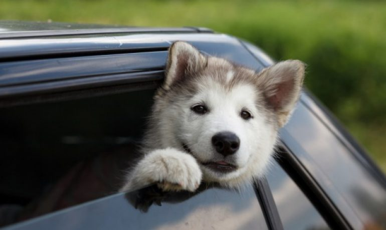 7 Trucos para ser la persona favorita de tu perro