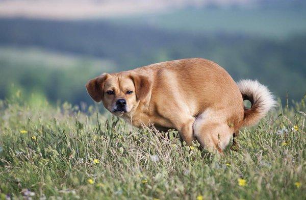 8 Extraños comportamientos de tu perro cuando hace caca