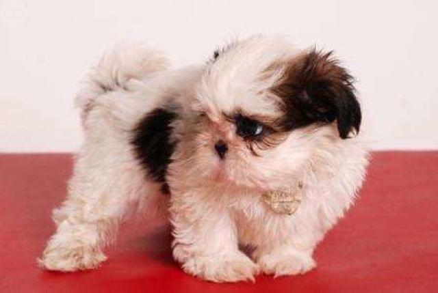 8 cosas que tu perro odia que hagas