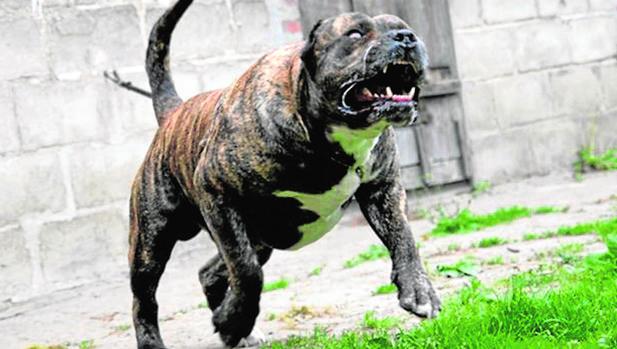 Agresividad hacia otros perros