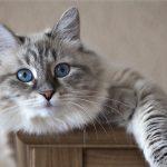 Alimento para gatos con problemas urinarios