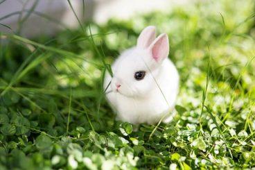 Así es el aparato respiratorio del conejo