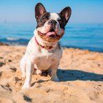 Barcelona abre su playa para perros con mejoras