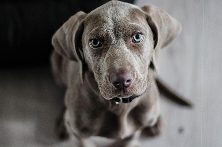 Beneficios de la dieta ACBA para perros
