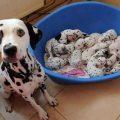 Cómo ayudar a un perro a parir