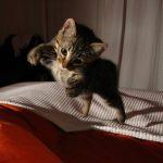 Cómo calmar a un gato hiperactivo
