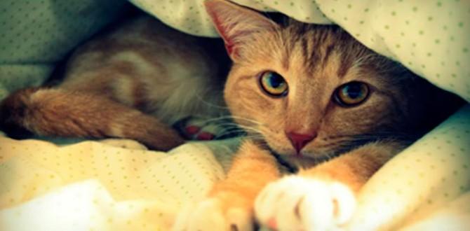 Cómo educar a un gato en obediencia