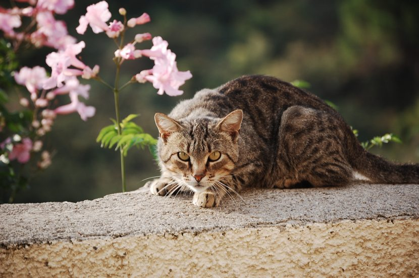 Cómo educar a un gato para corregir malos comportamientos