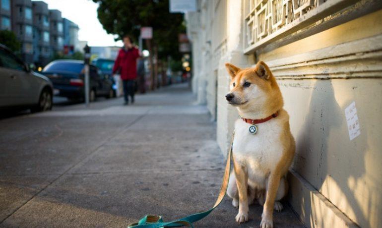 Cómo enseñar a un perro a sentarse