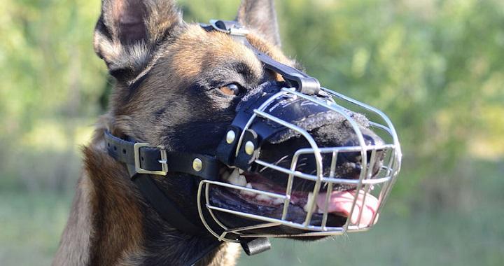 Cómo funciona la conducta agresiva en perros
