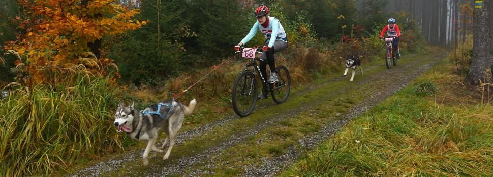 Cómo iniciarse en el bikejoring o ciclismo con perro