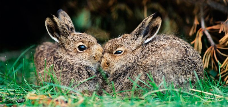 Cómo puedes prevenir la diarrea en conejos