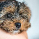 Cómo quitar el mal aliento de los perros
