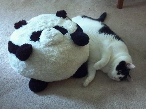 Cómo solucionar el sobrepeso en gatos