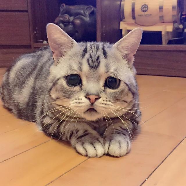 Cómo tratar la depresión en gatos