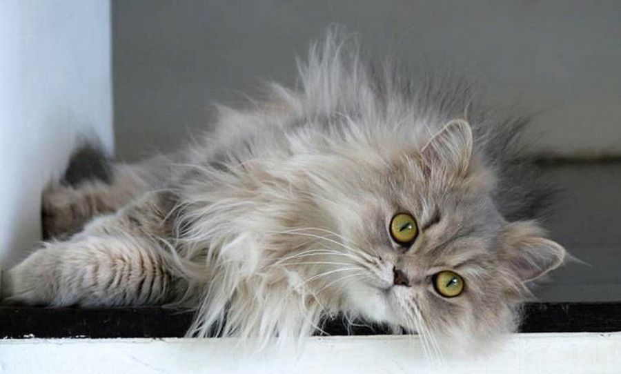 Causas del estrés en las mascotas